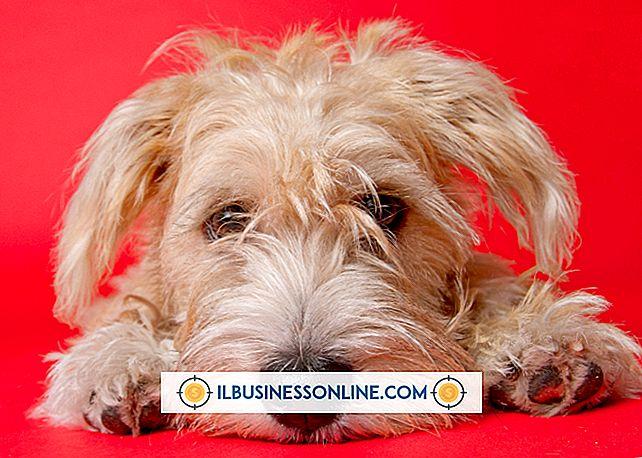 Kategori sette opp en ny virksomhet: Gode ideer for en hundekakevirksomhet